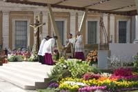 Blühender Osterschmuck für den Papst - Foto: IZB/BBH