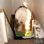 Spezial-Treppenlift für den Hund - Foto: Sachsen-Anhalt-Lifte
